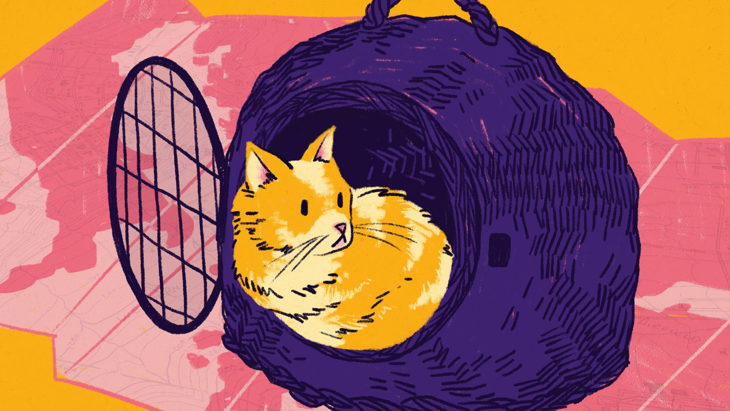 cat in basket.jpg